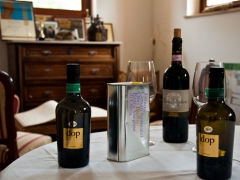olio-vino-cerulli-spinozzi (3)